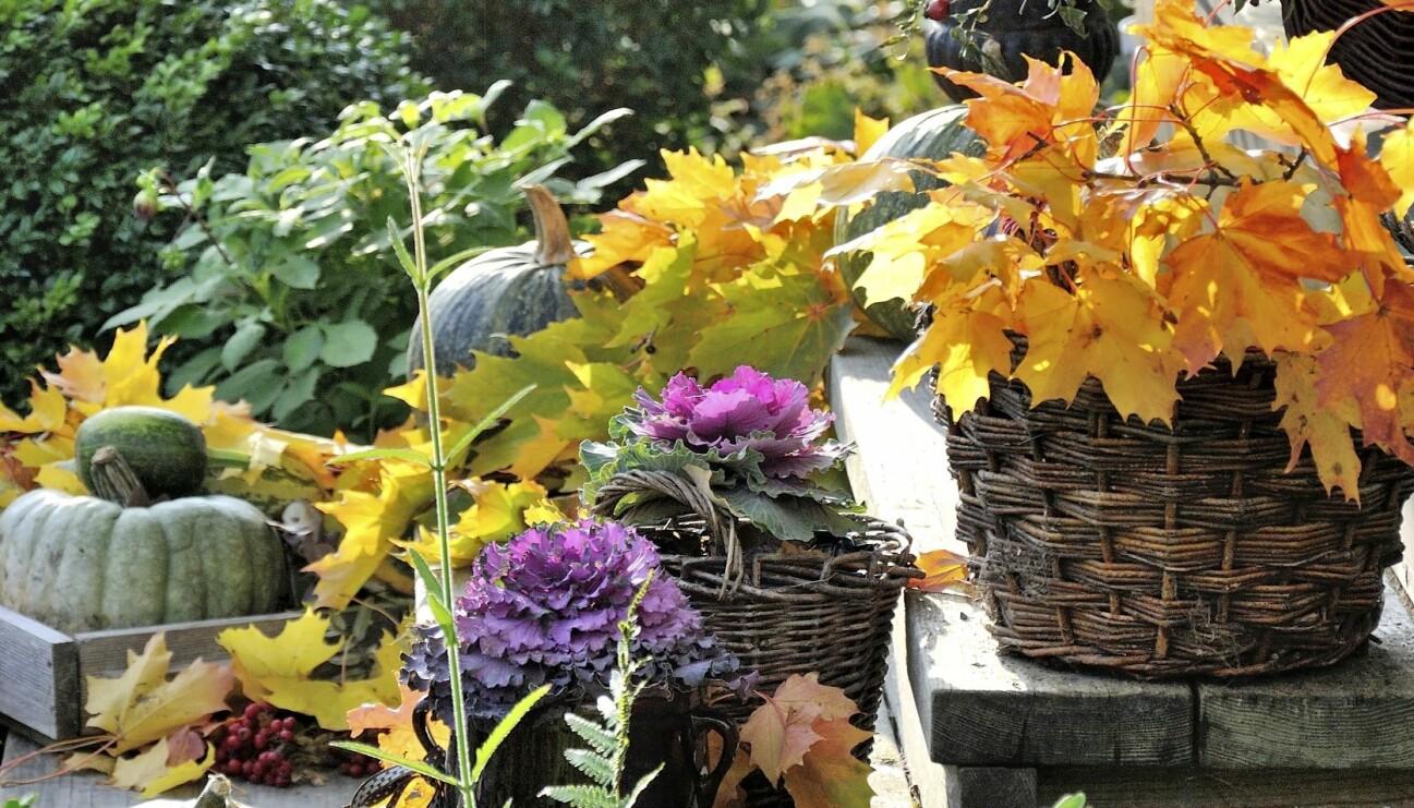 Med pumpor, prydnadskål, nypon och kvistar från den guldfärgade lönnen blir det höstfint på trappan.