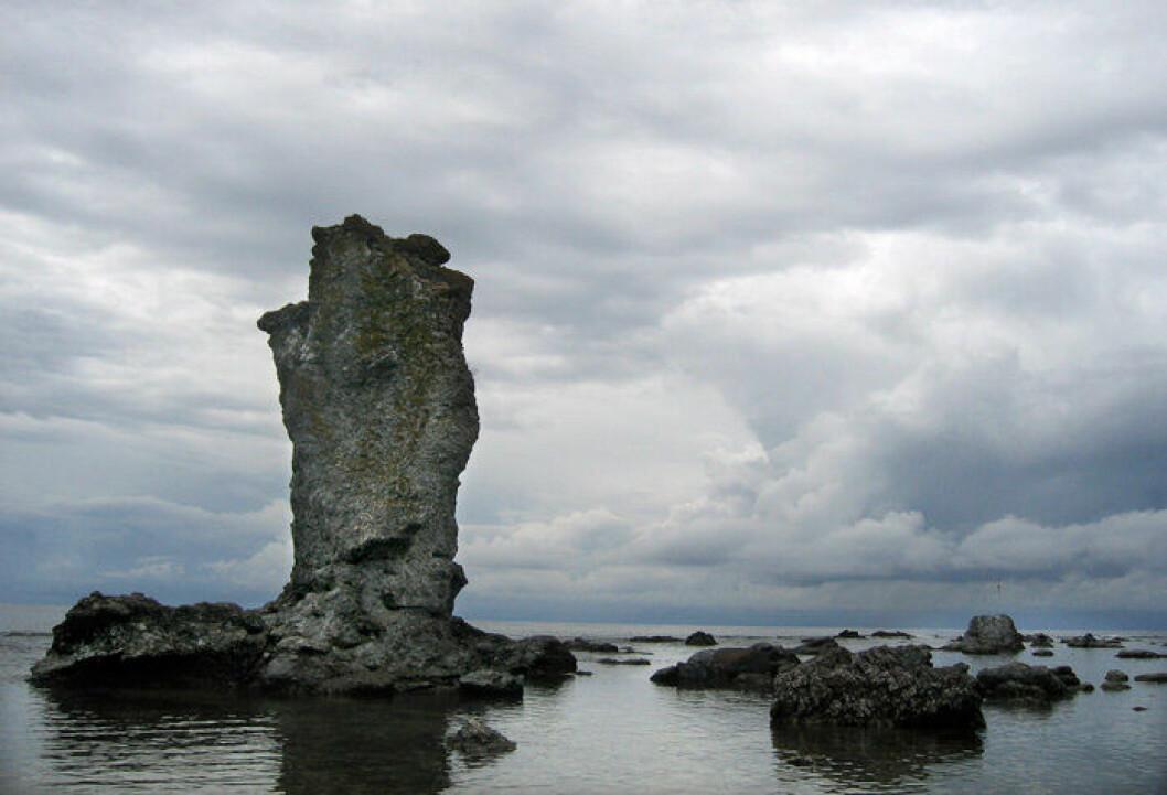 En bild på en rauk i naturreservatet Digerhuvud på Gotland.