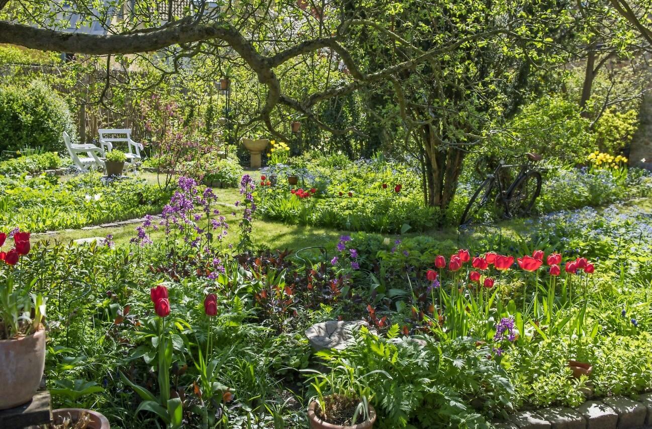 En bild på familjen Elfversons lummiga och storblommiga trädgård.