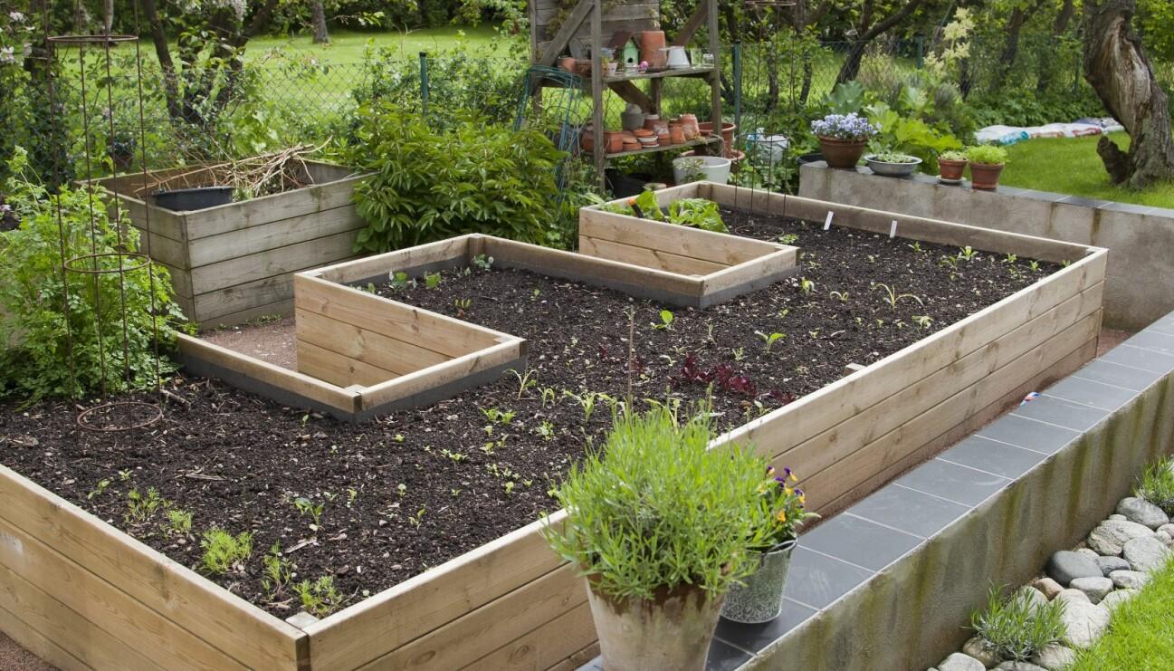En köksträdgård byggt enligt våra tips.