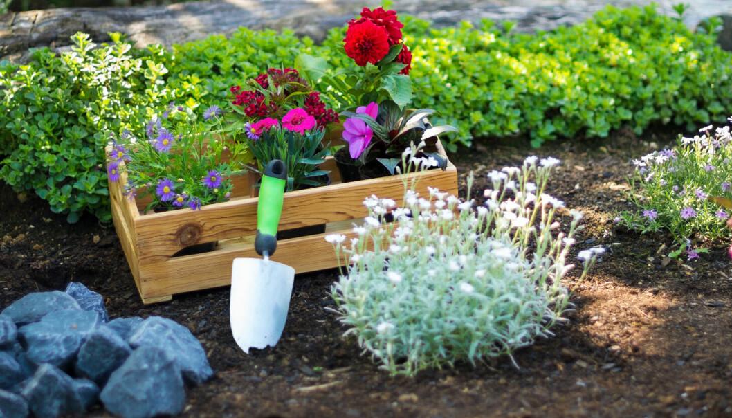 En nyanlags rabatt med blommor.