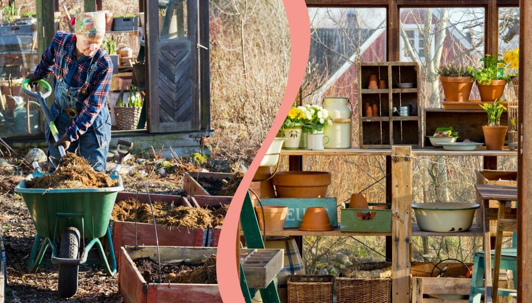 Delad bild på saker du bör göra för att vårstarta trädgården. Till vänster: Fyller på kompost i pallkrage. Till höger: Ett nystädat växthus.