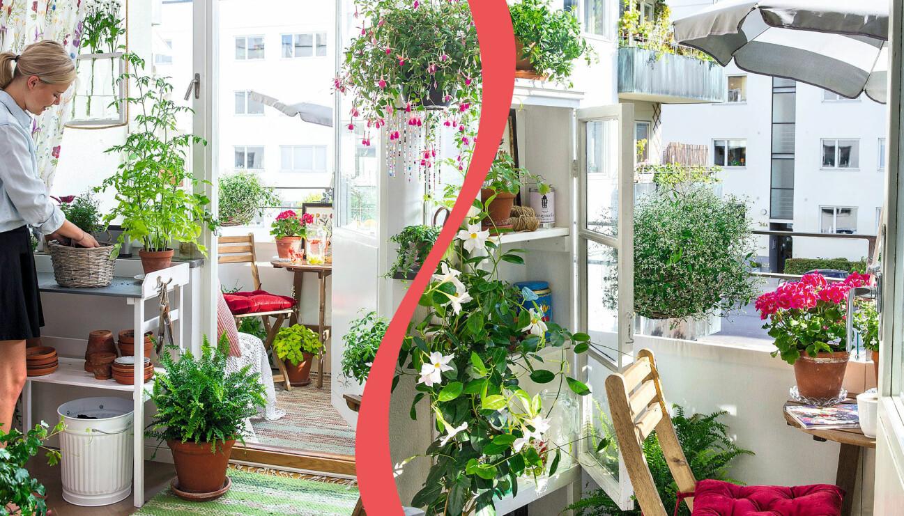 Genom att låta balkongen börja redan innanför dörren med ett planteringsbord och med ett snyggt skåp ute på balkongen så känns den större. Denna balkong är bara två kvadratmeter stor men känns som så mycket mer.
