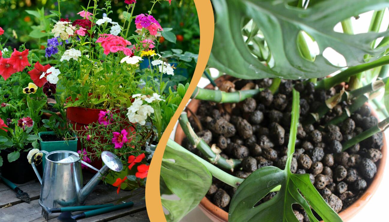 Två olika lösningar för att få krukväxterna att överleva semestern.
