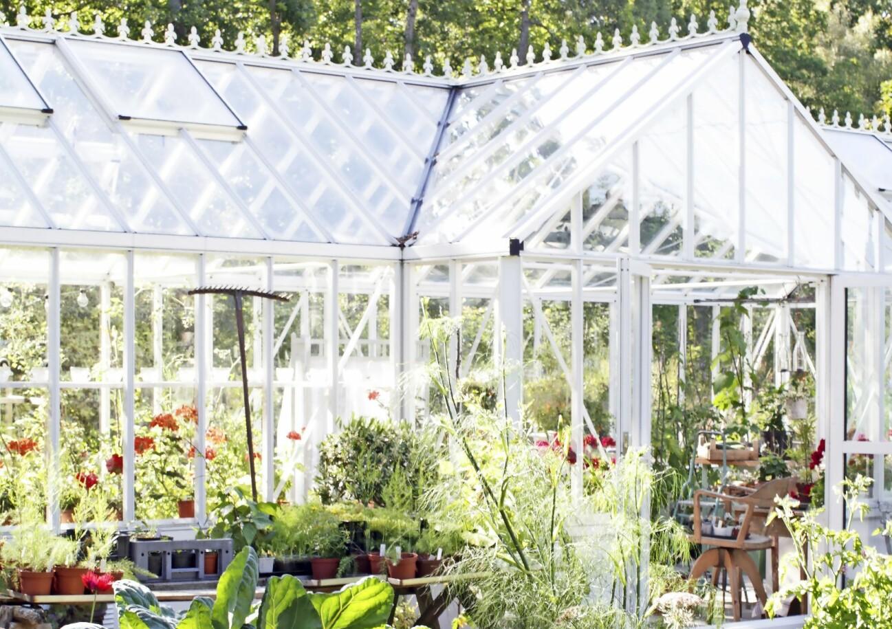 Ett växthus med plats för både umgänge och odling.