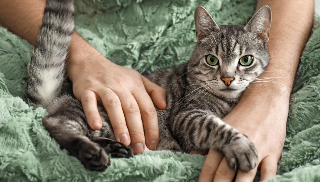 En katt som myser i famnen hos sin person.