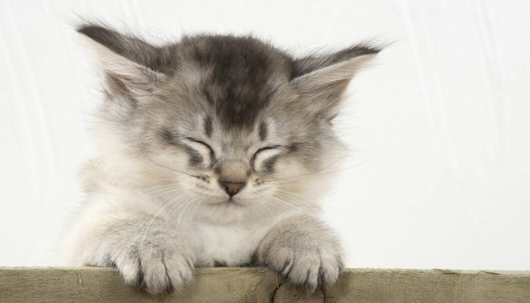 Söt kattunge som blundar