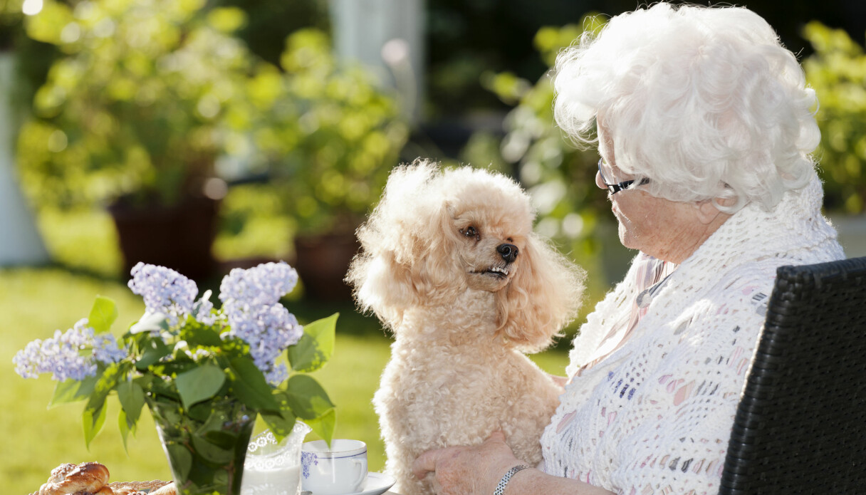 En hund tittar kärleksfullt på sin äldre ägare.