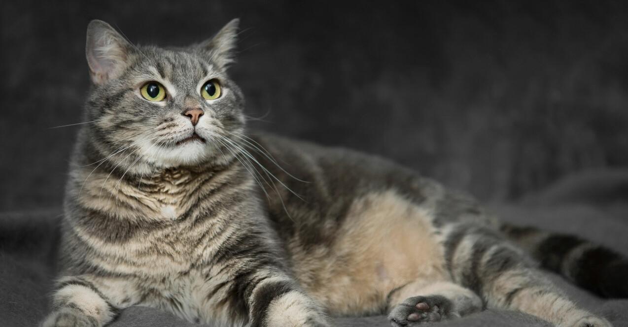 En katt som tittar kärleksfullt på sin matte.