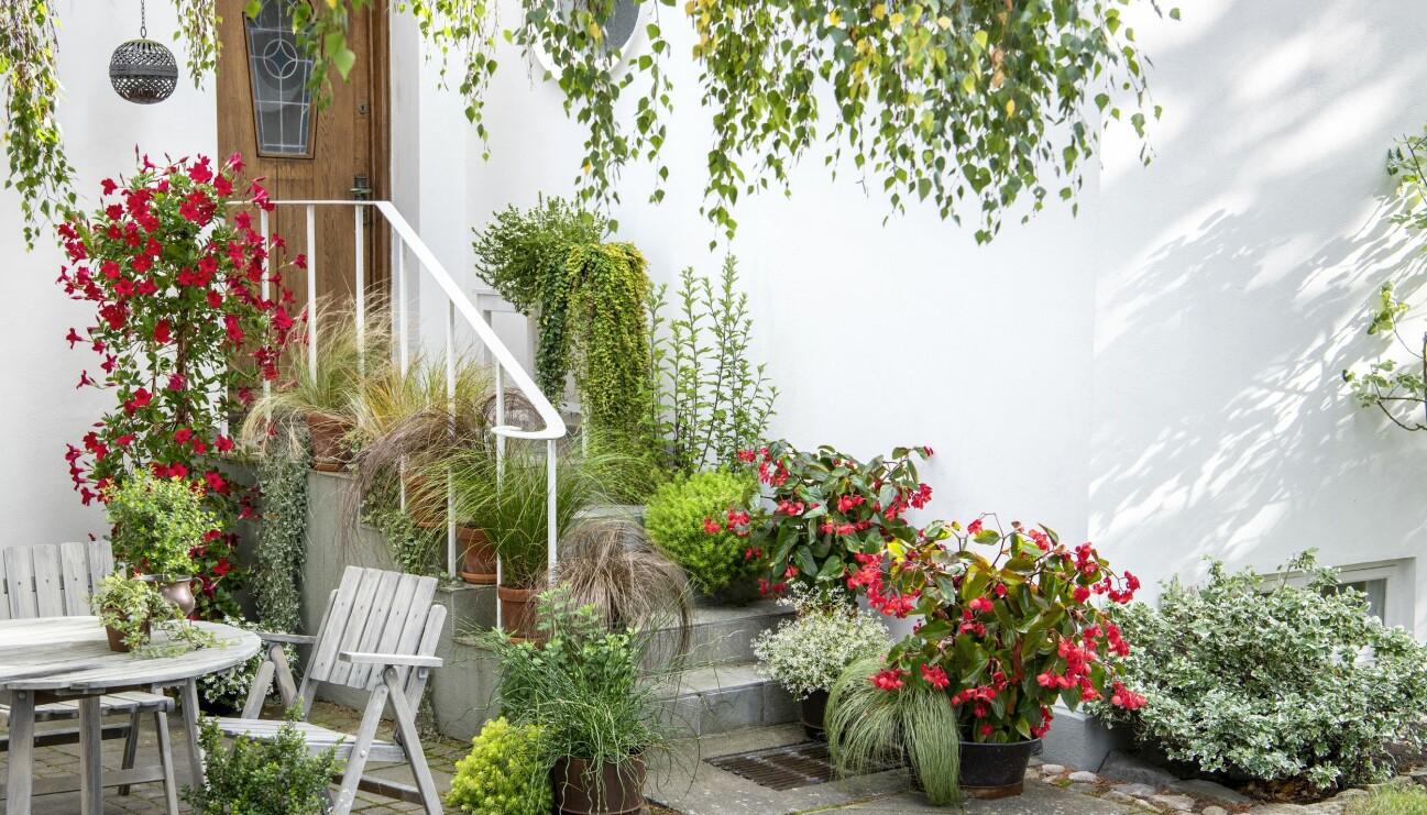 Blommor och prydnadsgräs i utekrukor på entrén.
