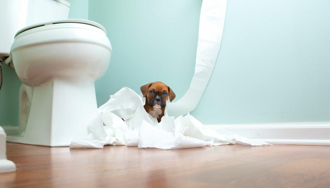 Föräldraledighet med husdjur går att få från vissa företag