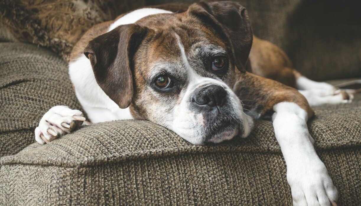 Att hunden blir äldre måste man ta hänsyn till.
