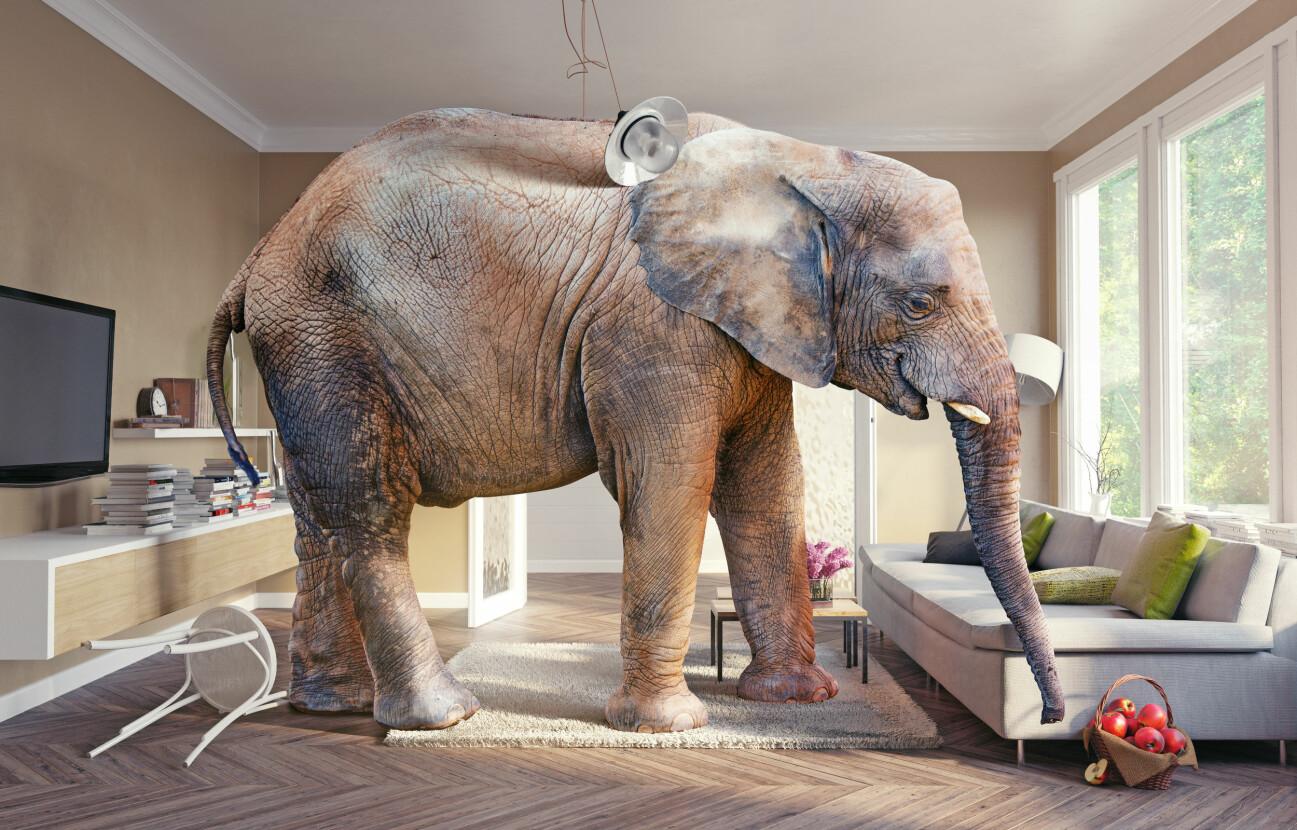 """Manipulerad bild på en elefant som står i ett rum för att illustrera att man ska """"prata om elefanten i rummet"""" i en relation."""