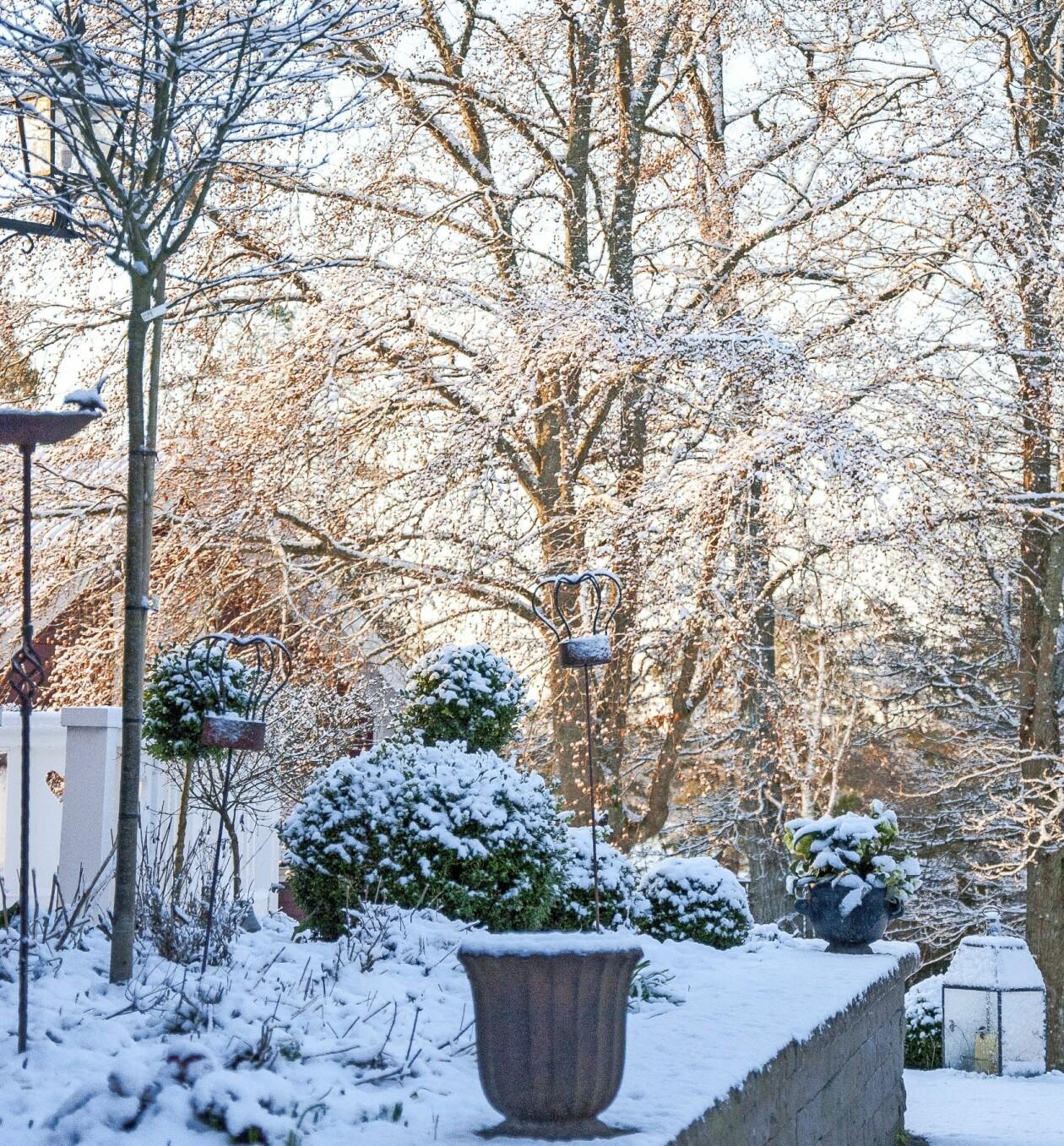 Silande ljus och strama linjer i vinterträdgården.
