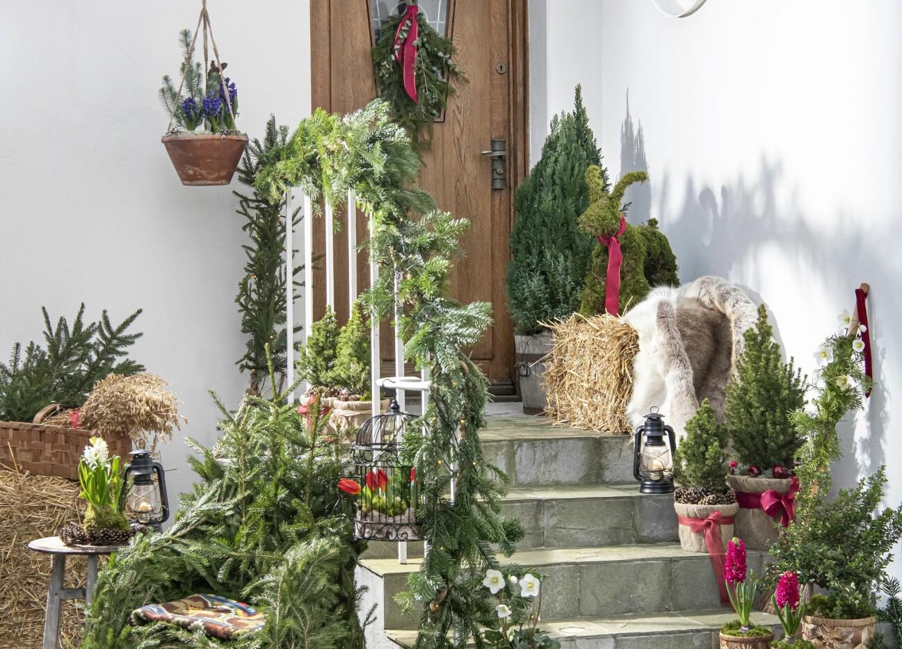 Skapa en välkomnande entré med kvistar och kottar till advent.