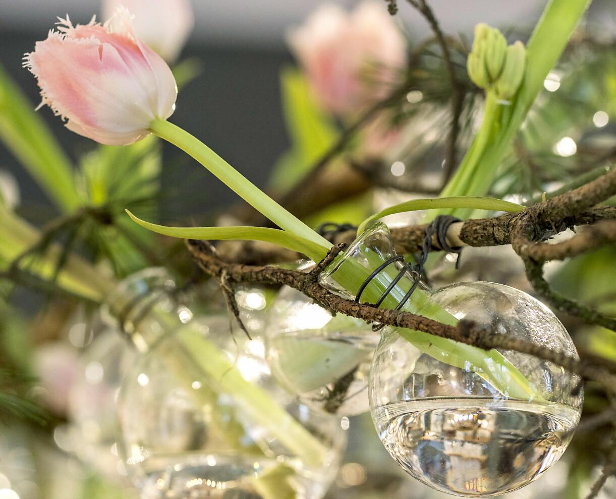 Små glasbollsvaser med tulpaner i .