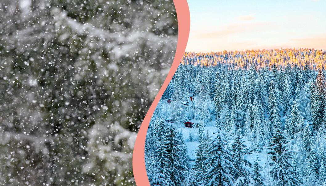 Till vänster, snö som faller, till höger, snö som lagt sig över skog.