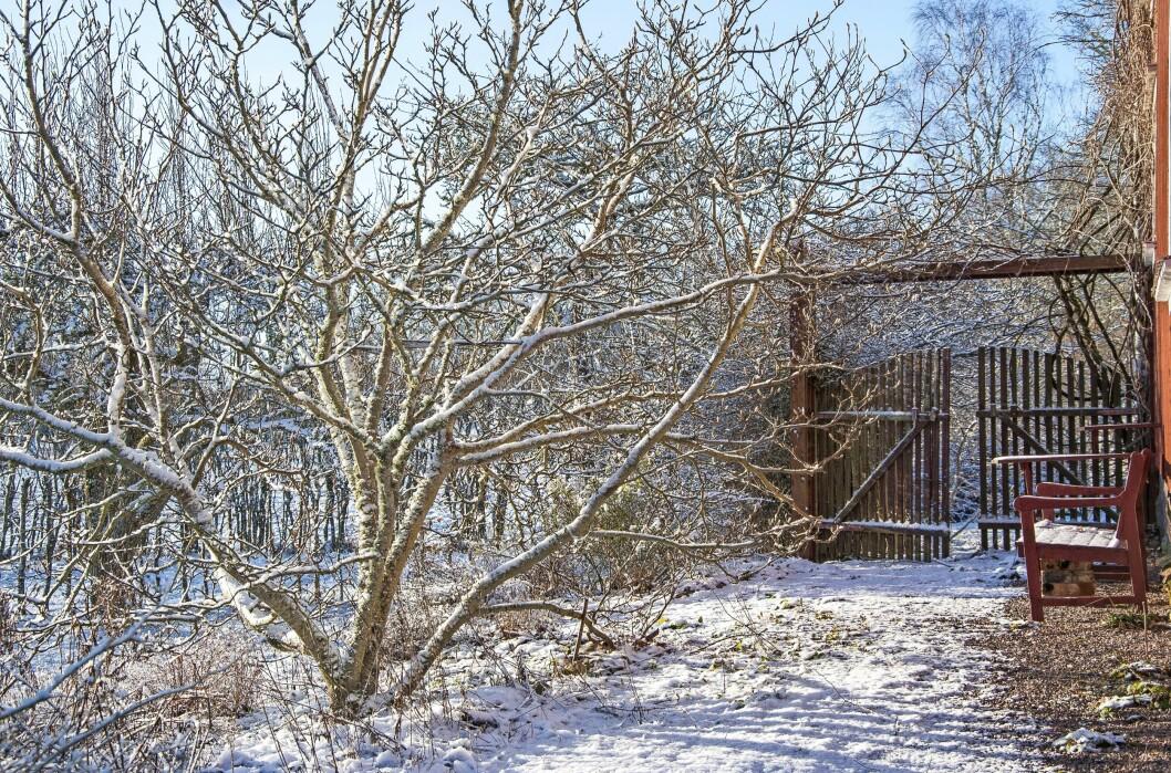 Spaljéer, staket, bänkar och grindar tillhör grundstrukturen i trädgården.