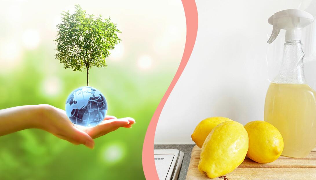 Till vänster, ett träd som växer från en liten jordglob, till höger, ett egengjort rengöringsmedel och citroner på en diskbänk