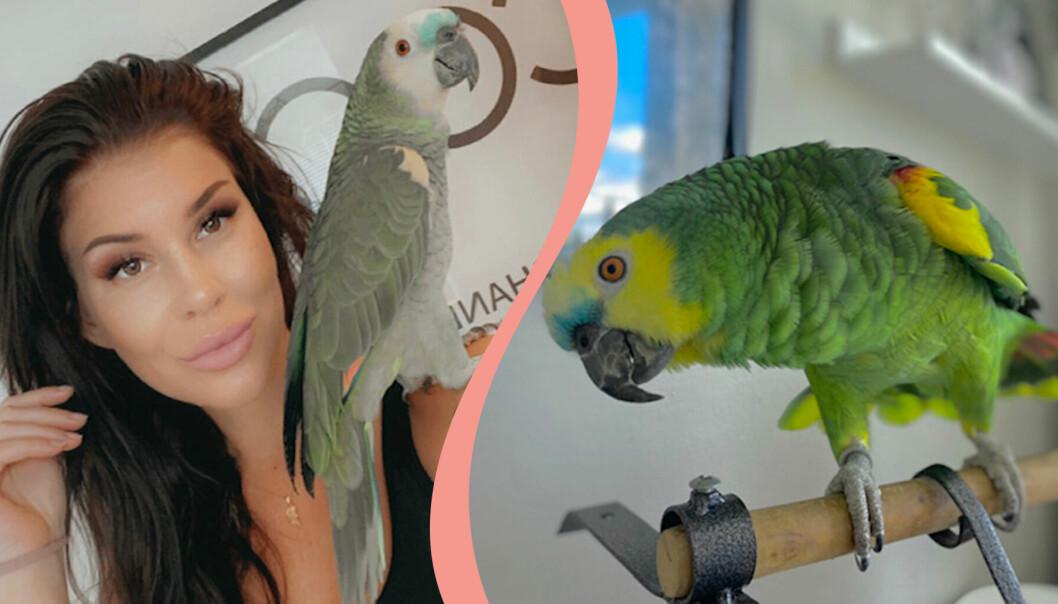 Michaela Nilsson och papegojan Sune bor i Tomelilla.