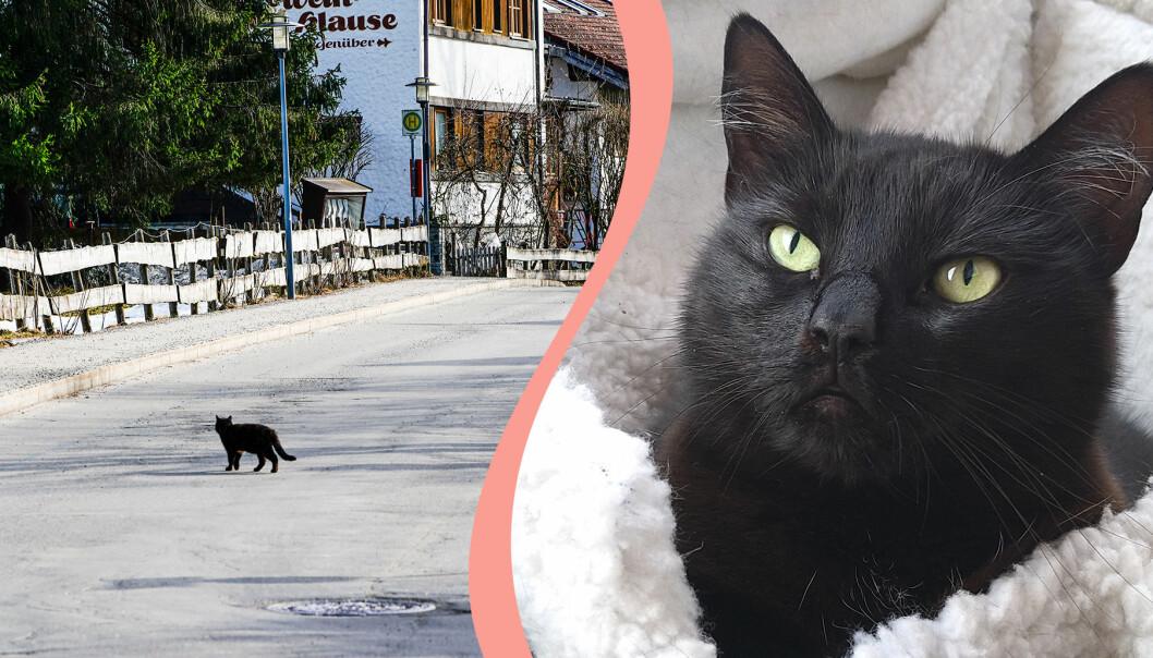 Till vänster, katt går över vägen, till höger, katten Diva.