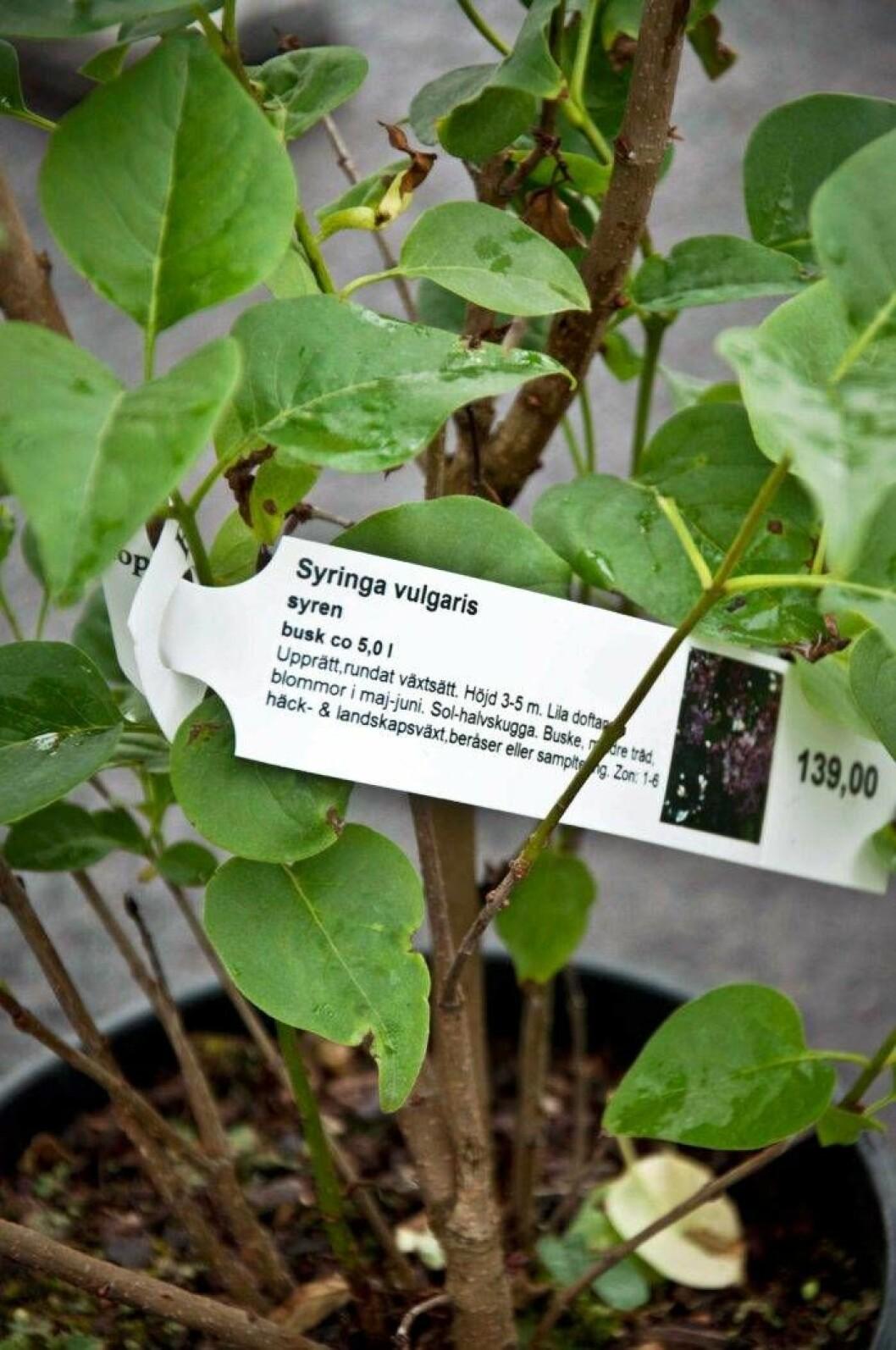 Motstå frestelsen att köpa en planta som inte passar där du vill ha den.