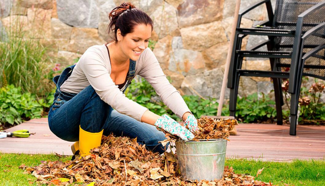 Höstfixa trädgården