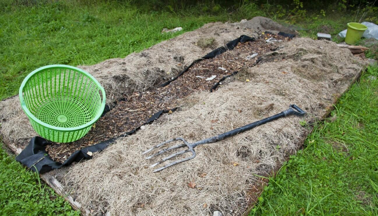 Många trädgårdsodlare skördar kål i slutet av säsongen. Gräsklippet får ligga kvar eller ersättas med nytt täcke. Det mår jorden bra av.