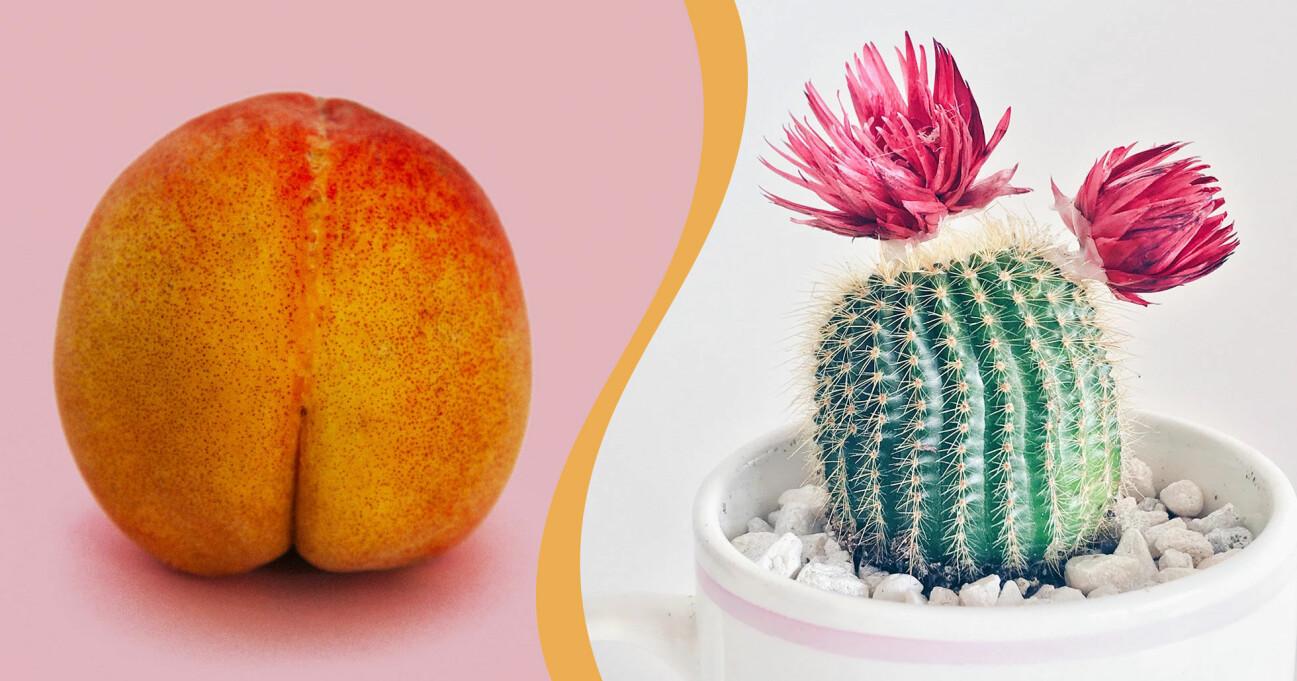 En persika som föreställer en rumpa och en kaktus med blommor som skulle kunna tolkas som hemorrojder.