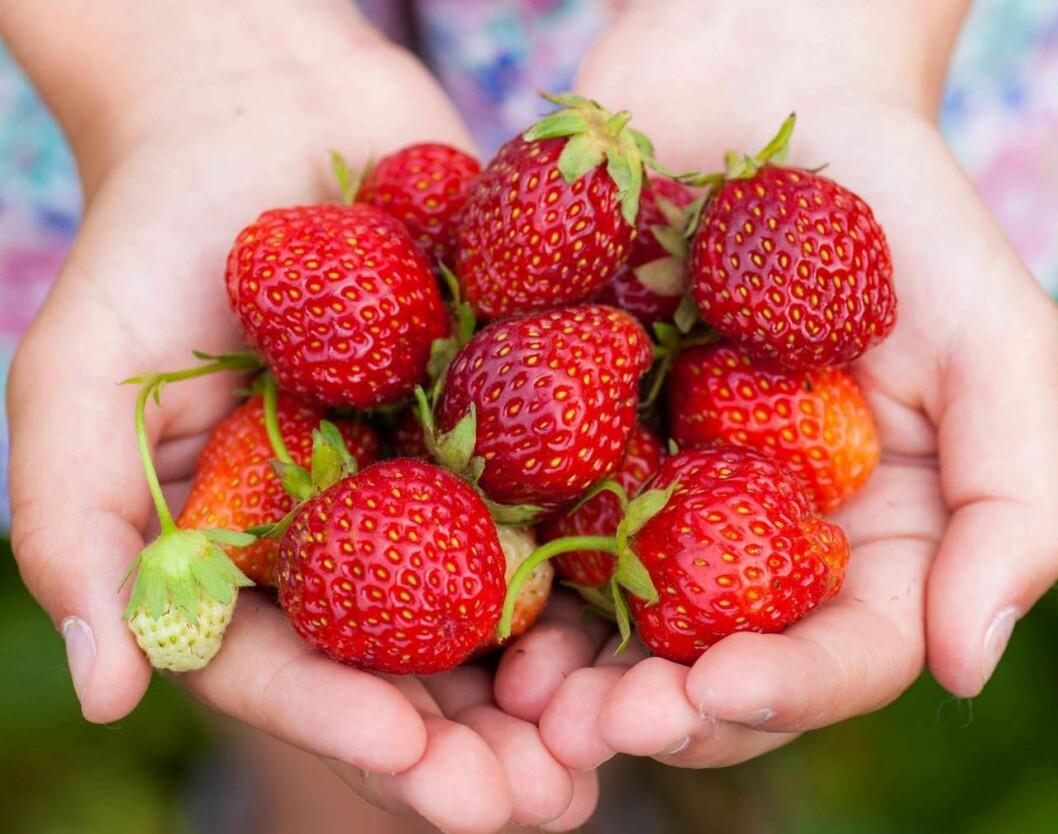 Hand med jordgubbar