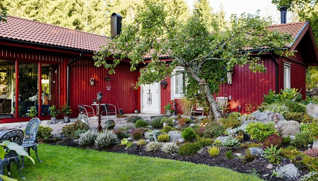 När Marjut och Lars-Gunnar köpte tomten 2009 lät de först bygga ett hus. Därefter tog det stora arbetet med att anlägga trädgården. I mitten står ett äppelträd och i mix med stenar växer bland annat barrväxter, ljung och låga rododendron.