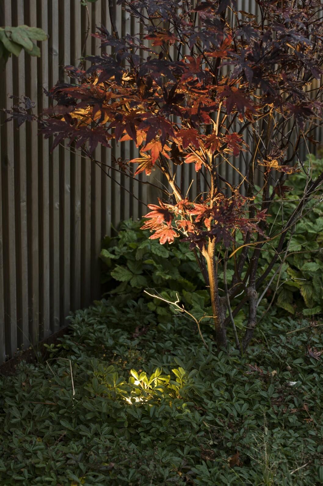 Allt efter årstid och hur trädgården förändras, flyttar och riktar Per om armaturerna så ljuset faller på bästa sätt.