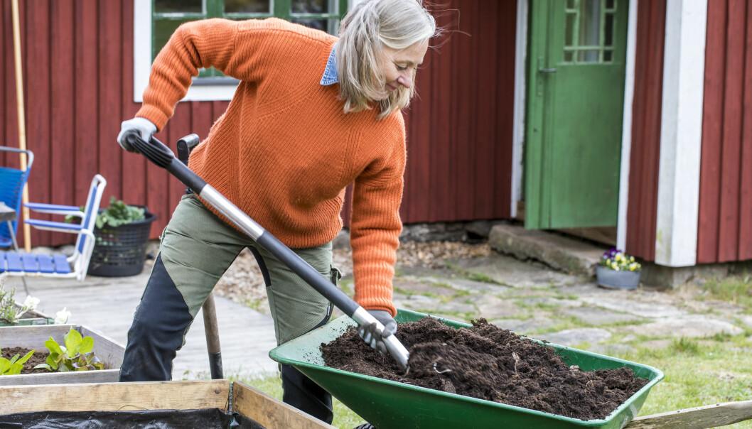 Trädgårdsexperten Anni Jähde fyller på pallkragen med jord.