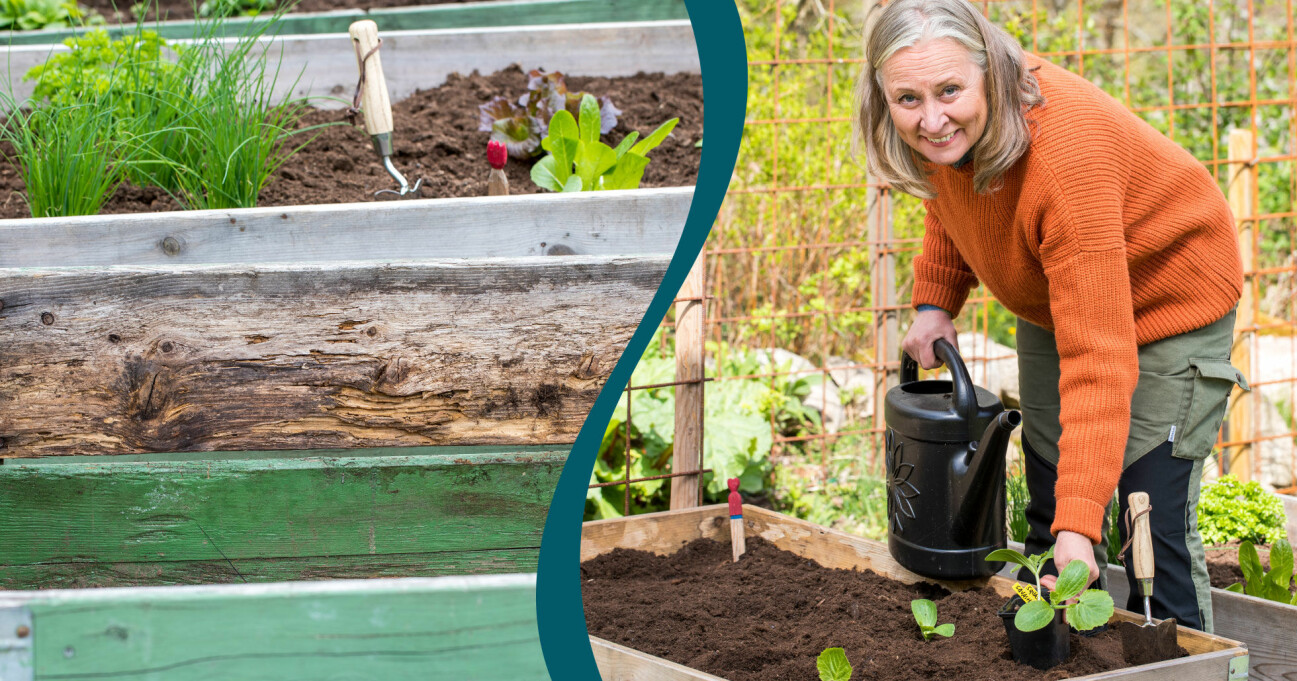 Trädgårdsexperten Anni Jähde visar hur du odlar i pallkrage från början.