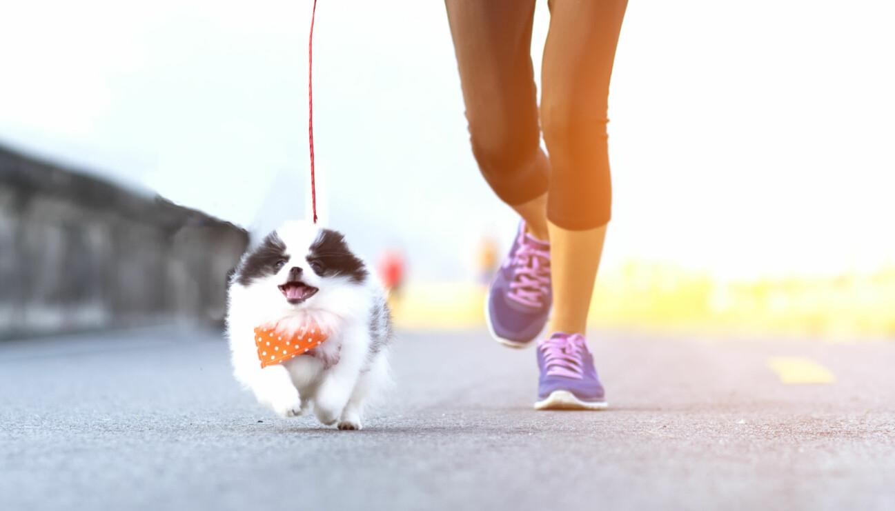 Kvinna joggar bredvid hund