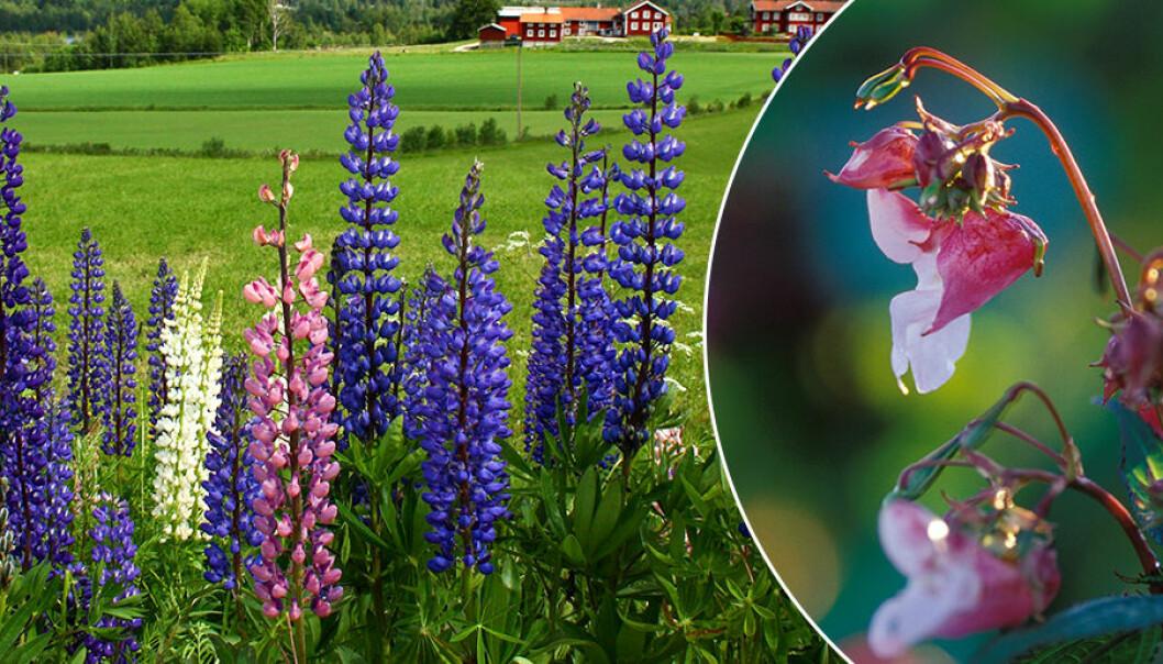 Här är tre växter att undvika om du vill ha en fin trädgård.