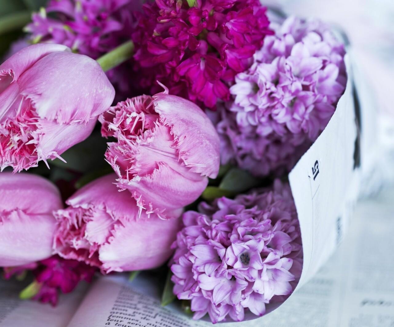 Tulpanbukett i lila toner.