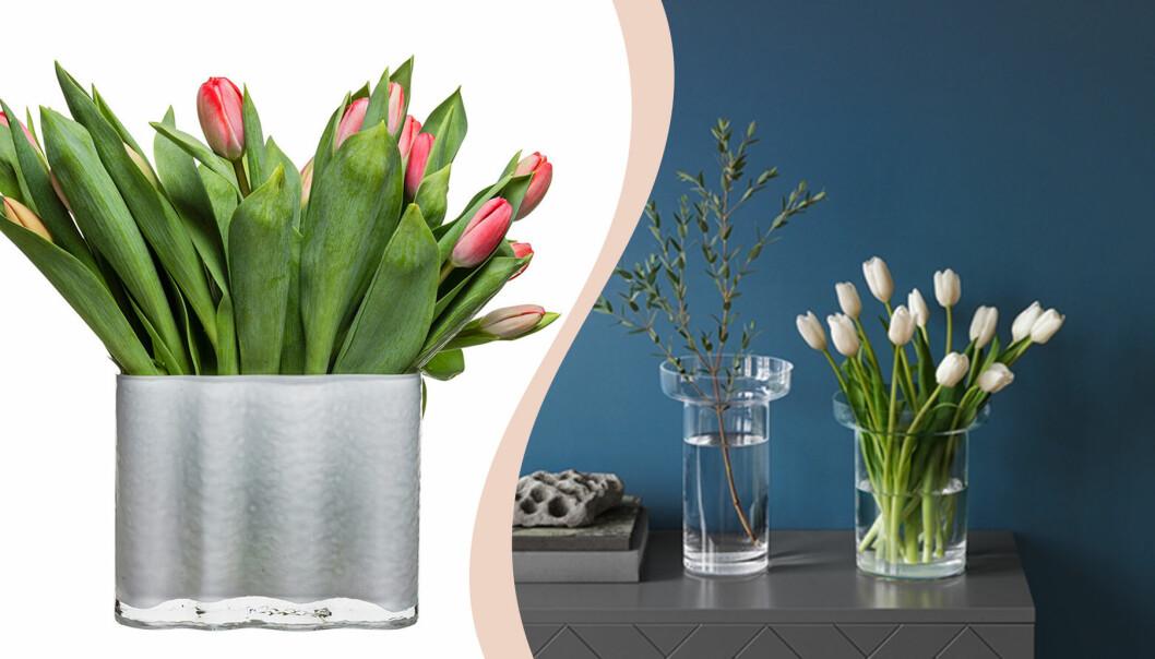 Tulpaner i vaser
