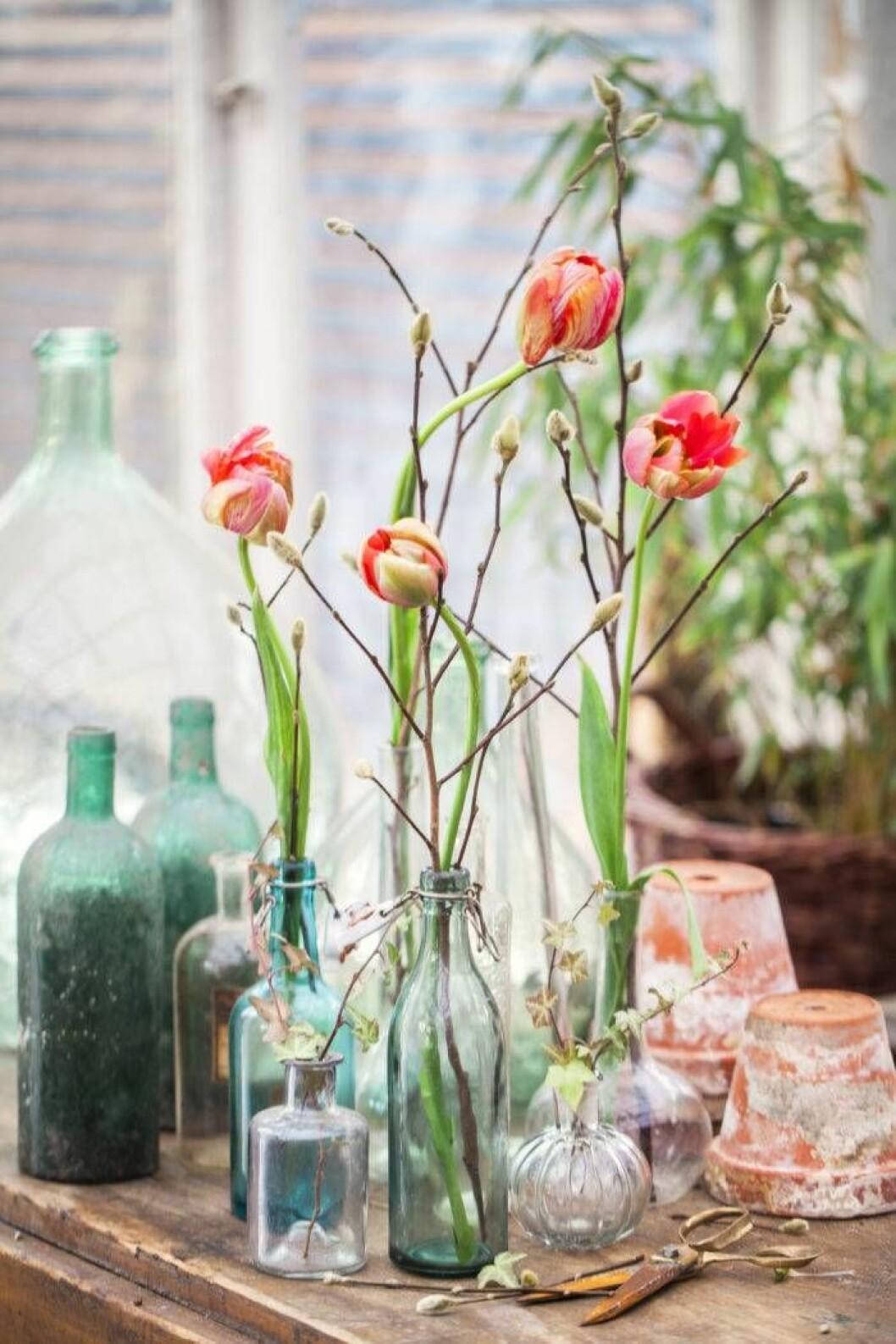 Franska tulpaner – lite elegantare.