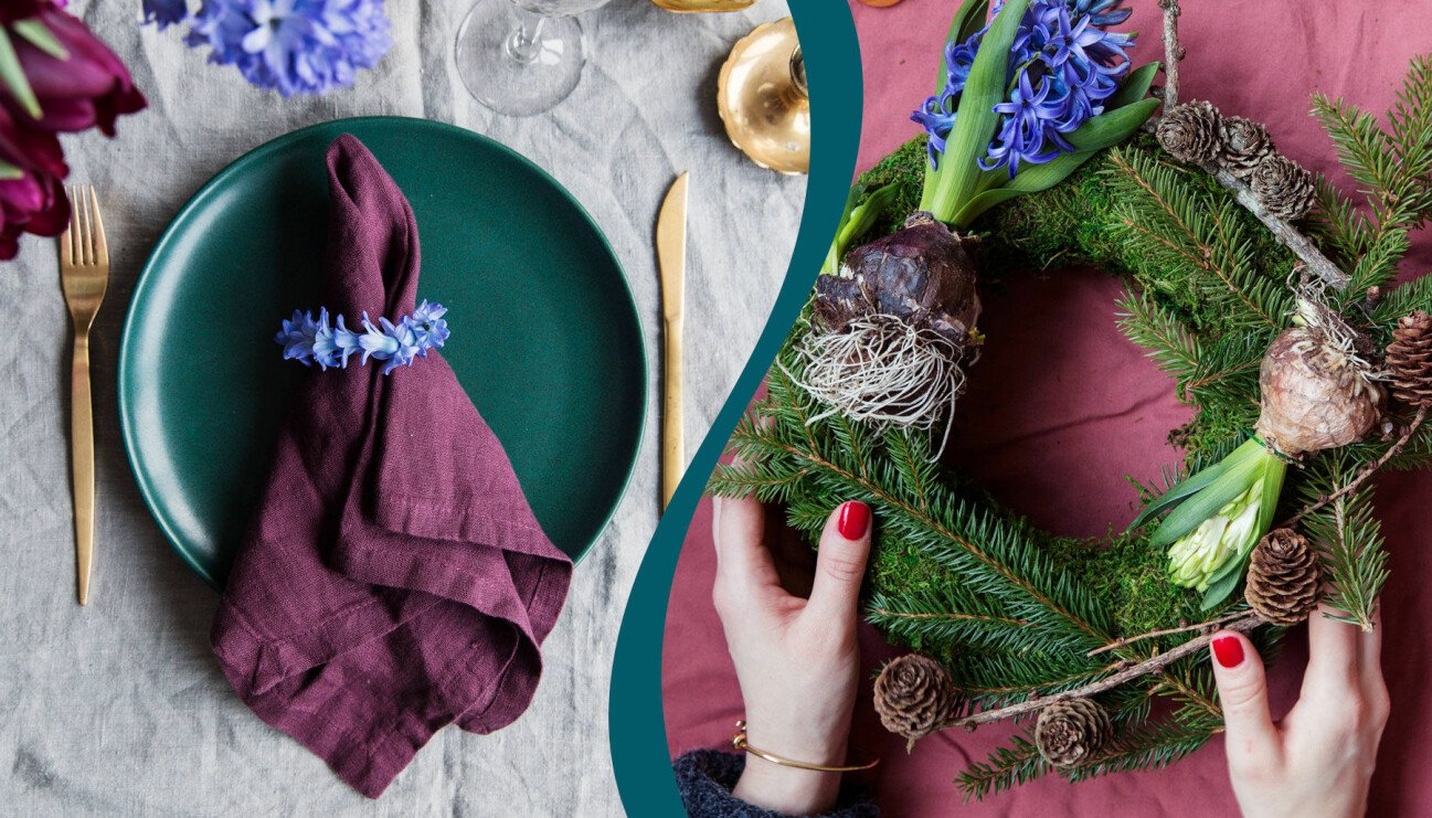 Två olika arrangemang med hyacint till julen.