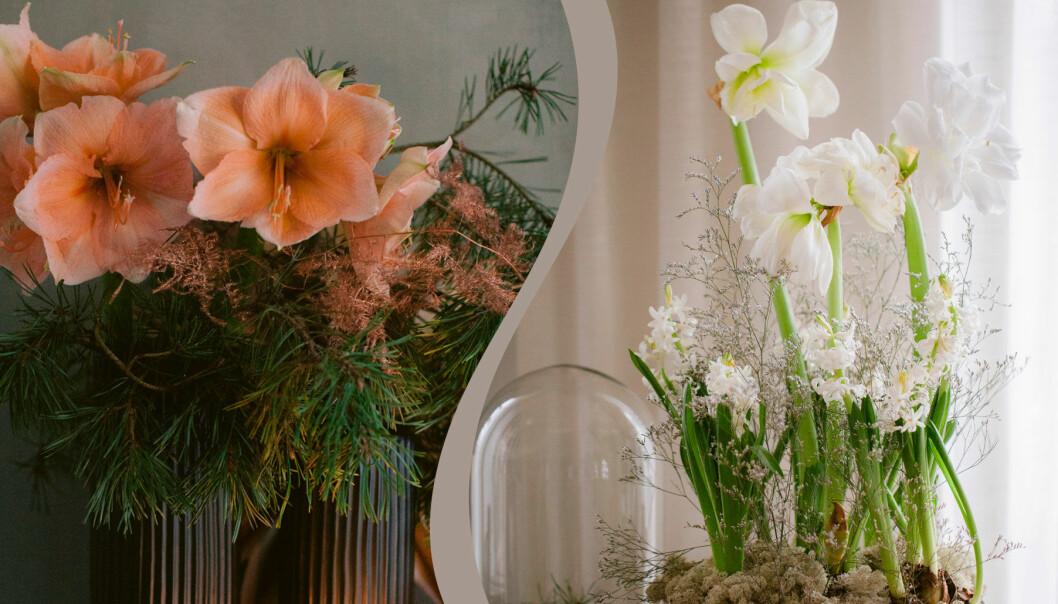 Två olika blomsterarrangemang med amaryllis till julen.