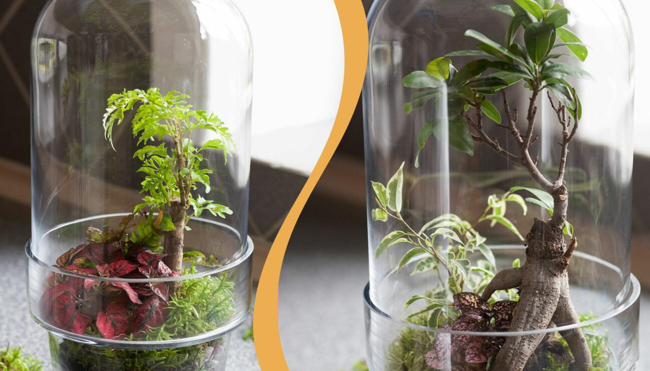 Två olika exempel på enkla terrarium du kan göra till dina växter.