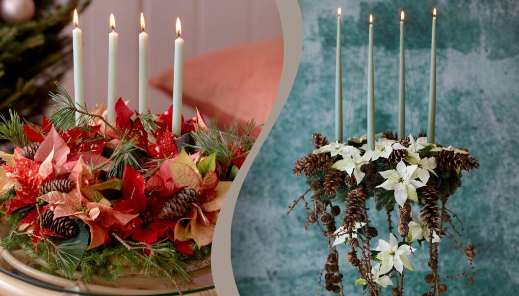 Två olika juliga arrangemang med julstjärnor.
