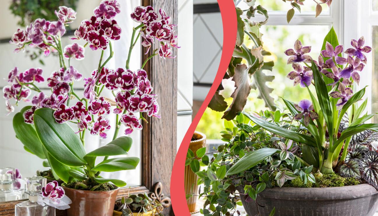 Två olika orkidéarrangemang.