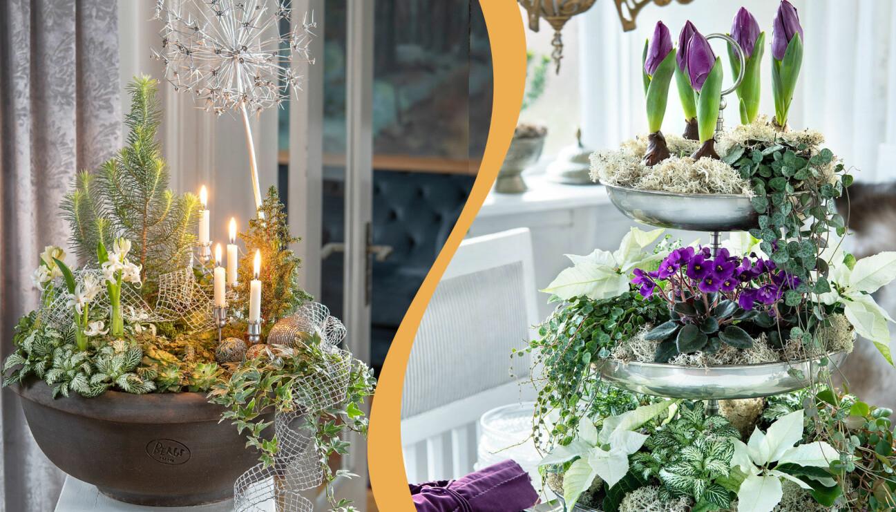Två olika stora blomsterarrangemang till nyårsafton med små växter.