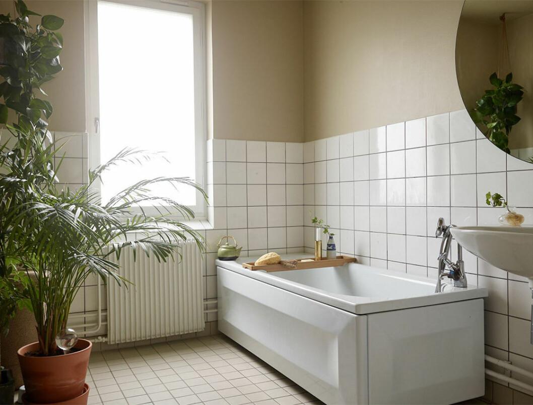 Badrum med målade väggar och grönska