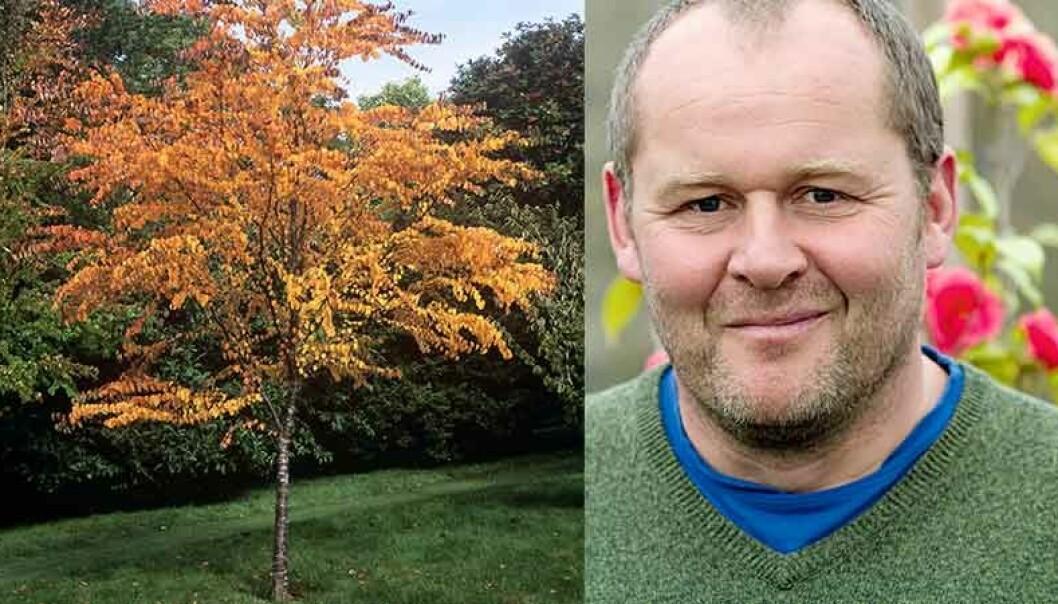 John Taylor tipsar om fina små träd att plantera.