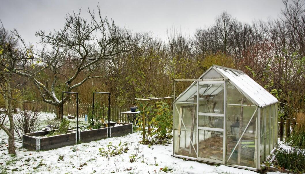 Växthus redo för vinterodling av grönsaker.