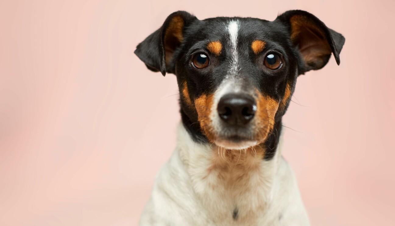 Söt hund som tittar bedårande.